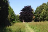 Landgoed De Schapenhof